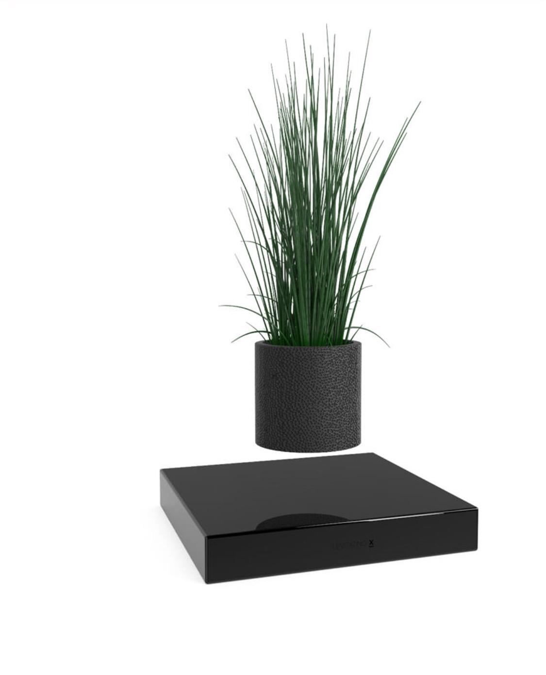 Levitating plant slaylebrity for Levitating plant