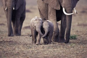 This video of a Baby elephant will make you smile