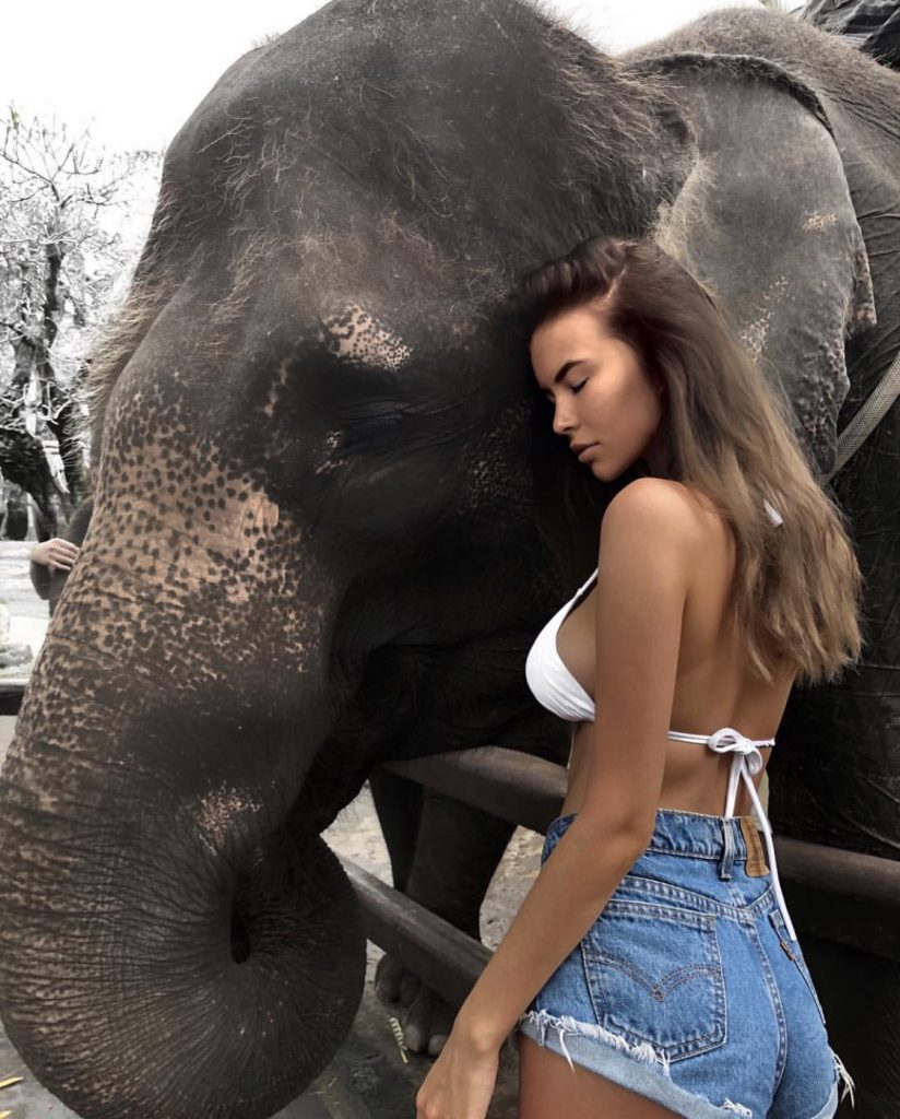Mason elephant safari lodge Bali