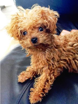Top 10 Small Dogs Who Make Good Apartment Dogs