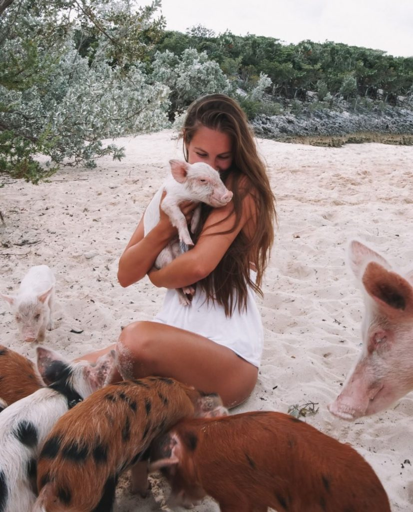 The Exumas Islands: home of the swimming pigs