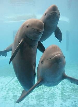 Here's why Cetaceans may be smarter and cooler than you