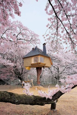 The worlds best Tree Houses