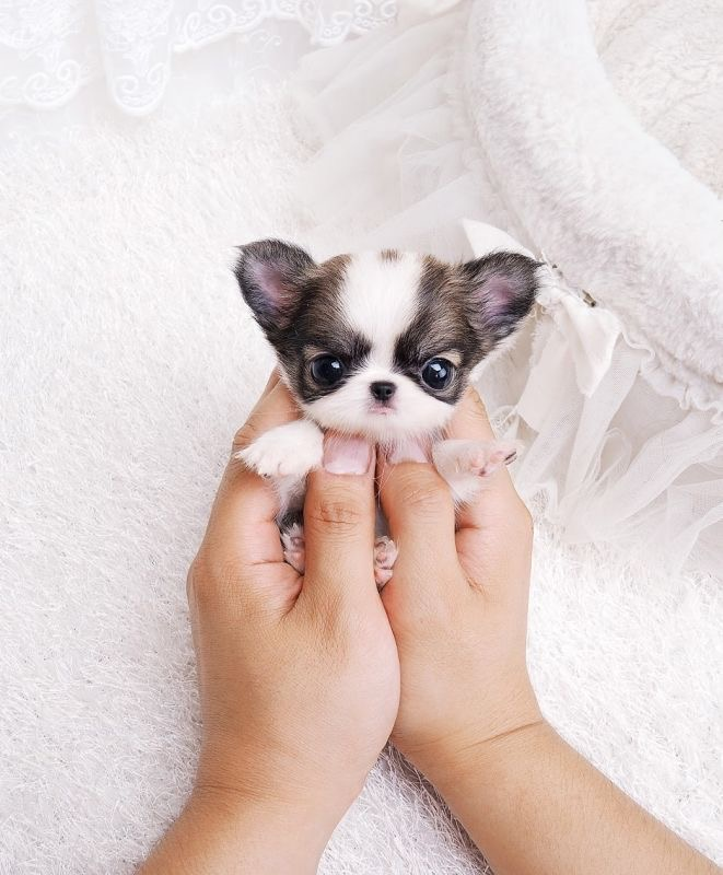 Why are babies and puppies so darn cute