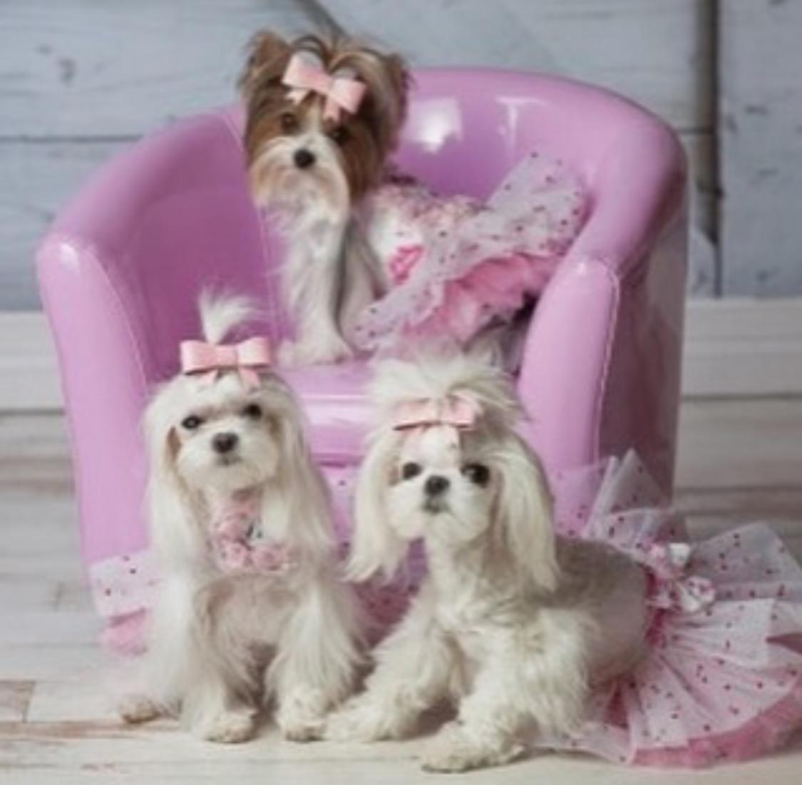 Posh puppies are the latest social status symbol