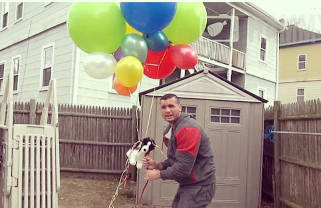 Puppy tied to helium balloons 'floats away' in cruel prank on devastated owners