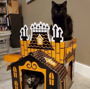 Haunted Mansion for your cat