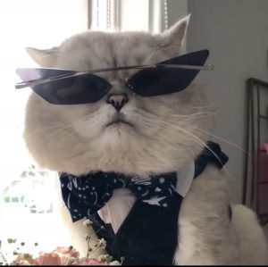 Luxury Sunglasses for your posh cat
