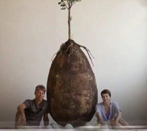 Organic coffin Pods