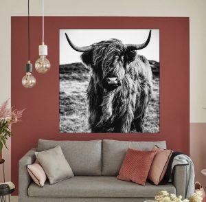Luxury highland cow Art Print